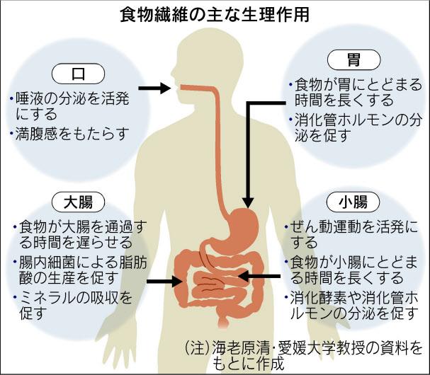 免疫力を上げる食事①腸の活動を上げる