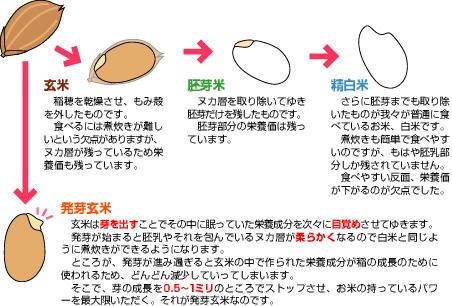 矯正治療のための食育を考える!⑧玄米食