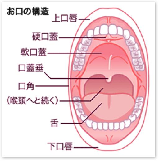 口腔粘膜疾患について