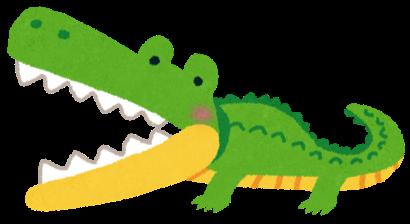 いろいろな動物の歯について